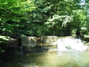 Entre bois et rivière